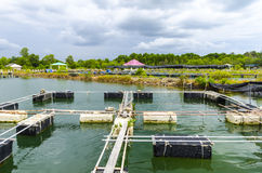 Fischfarm im Teich. Lizenzfreie Stockbilder