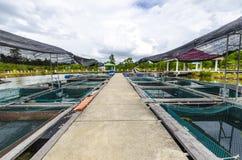 Fischfarm im Teich. Stockbilder