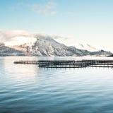 Fischfarmen in Nord-Norwegen Stockfotos