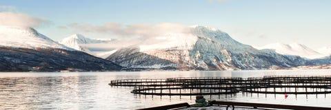 Fischfarmen in Nord-Norwegen Stockfotografie