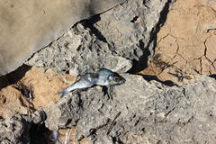 Fischgräten Stockfotografie