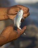 Fischgröße Stockbild
