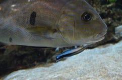 Fischgrößen Lizenzfreie Stockfotos