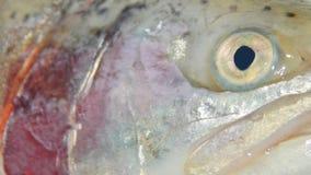 Fischhauptforelle Lizenzfreie Stockfotografie