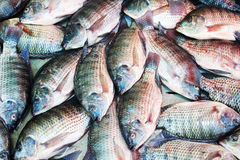 Fischhintergrund, Tilapia Lizenzfreie Stockfotografie