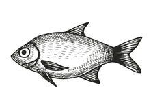 Fischhinterwellenskizze Stock Abbildung