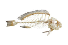 Fischknochen Stockfotos