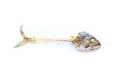 Fischknochen Stockfoto