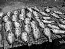 Fischkonserven, die in Tai O, Hong Kong machen Stockbilder