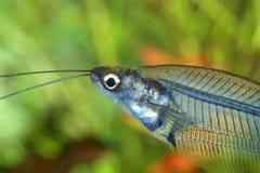 Fischkopf Lizenzfreie Stockfotos