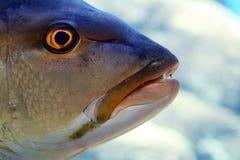 Fischkopf Stockbild