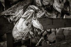 Fischköpfe in Norwegen Lizenzfreie Stockfotos