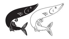 Fischmakrelenhecht Stockfotografie
