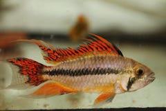 Fischmakro lizenzfreies stockbild