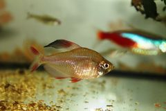 Fischmakro stockbilder