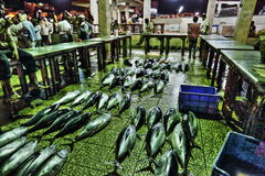Fischmarkt in Aden Lizenzfreie Stockbilder