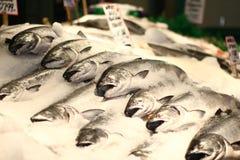 Fischmarkt in Hong Kong Stockbilder