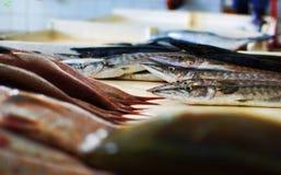 Fischmarkt Quriyat Oman Stockfotos