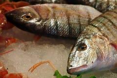 Fischmarkt Sand steenbras (Lithognathus-mormyrus) Stockfotos