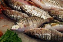 Fischmarkt Sand steenbras (Lithognathus-mormyrus) Stockbild
