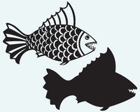 Fischpiranha Lizenzfreies Stockfoto