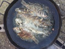 Fischrogen stockfoto