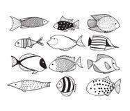 Fischsammlung Lizenzfreies Stockfoto