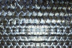 Fischschuppen Stockfotografie