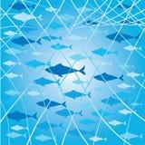 Fischschwarm Stockbild