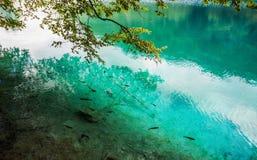 Fischschwarmschwimmen in einem Waldsee im haarscharfen Türkiswasser Plitvice, Nationalpark, Kroatien stockfotografie