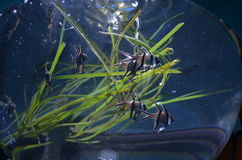 Fischschwimmen in einem Behälter Lizenzfreie Stockfotos