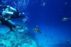 Fischschwimmen für das Tauchen Stockfotos