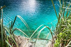 Fischschwimmen im klaren Türkiswasser am Ufer des Sees Plitvice, Nationalpark, Kroatien lizenzfreies stockfoto