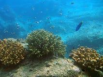 Fischschwimmen im Korallenriff Stockfotografie