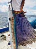 Fischsegelboot Stockfotografie