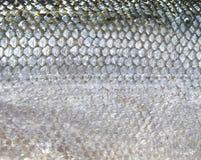 Fischskalen lizenzfreie stockfotos