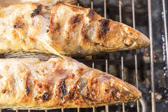 Fischstange zu Hause gebacken auf dem Grill Stockbilder