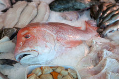 Fischsystem Stockfoto
