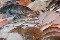 Fischsystem Stockbilder