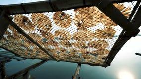 Fischtrockner in der Sonne stock video