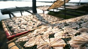Fischtrockner in der Sonne stock footage
