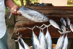 Fischverkäufer zeigt einen Thunfisch an einem Fischmarkt Lizenzfreie Stockbilder