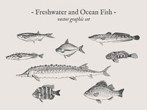 Fischweinlesevektor-Illustrationssatz Stockfotos