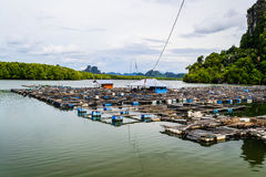 Fischzucht Stockbild