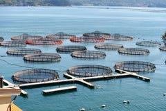 Fischzucht im La Spezia, Italien stockbilder