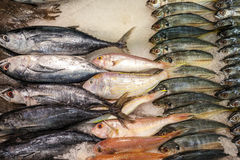 Fisf on ice. In an shop you find fish on ice Royalty Free Stock Images