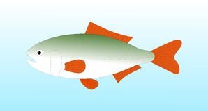 Fish-01. Simple fish illustration (bream stock illustration