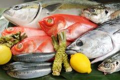 Free Fish Royalty Free Stock Photos - 10252188