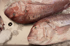 Fish. Fih market in funchal, madeira Royalty Free Stock Images