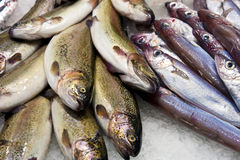 Fish. On a  market in Barcelona Royalty Free Stock Photography